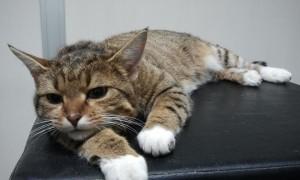 Raja tänavalt toodud kass
