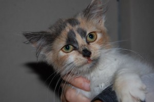 Järvelt leitud kassipoeg Grinch